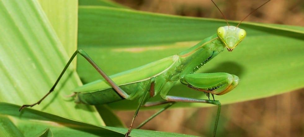 Wat is nu eigenlijk biodiversiteit