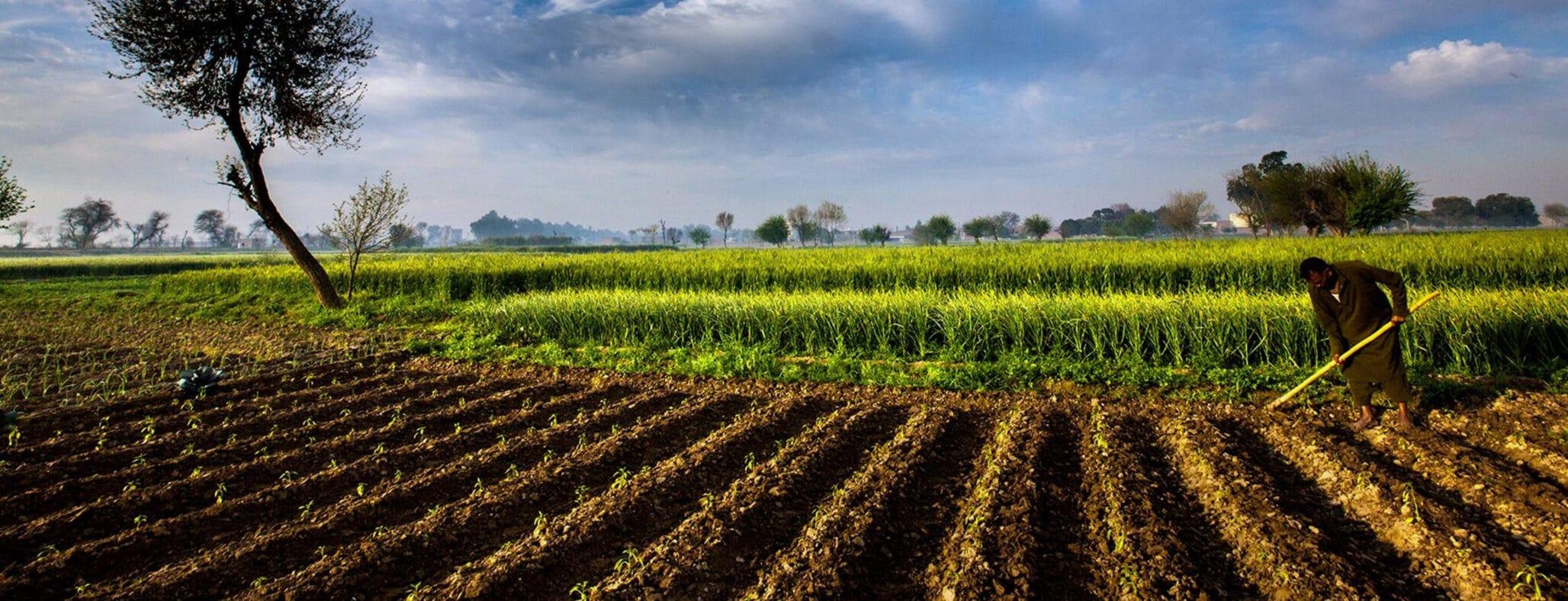 Investeren in landherstel levert (financiële) vruchten op!