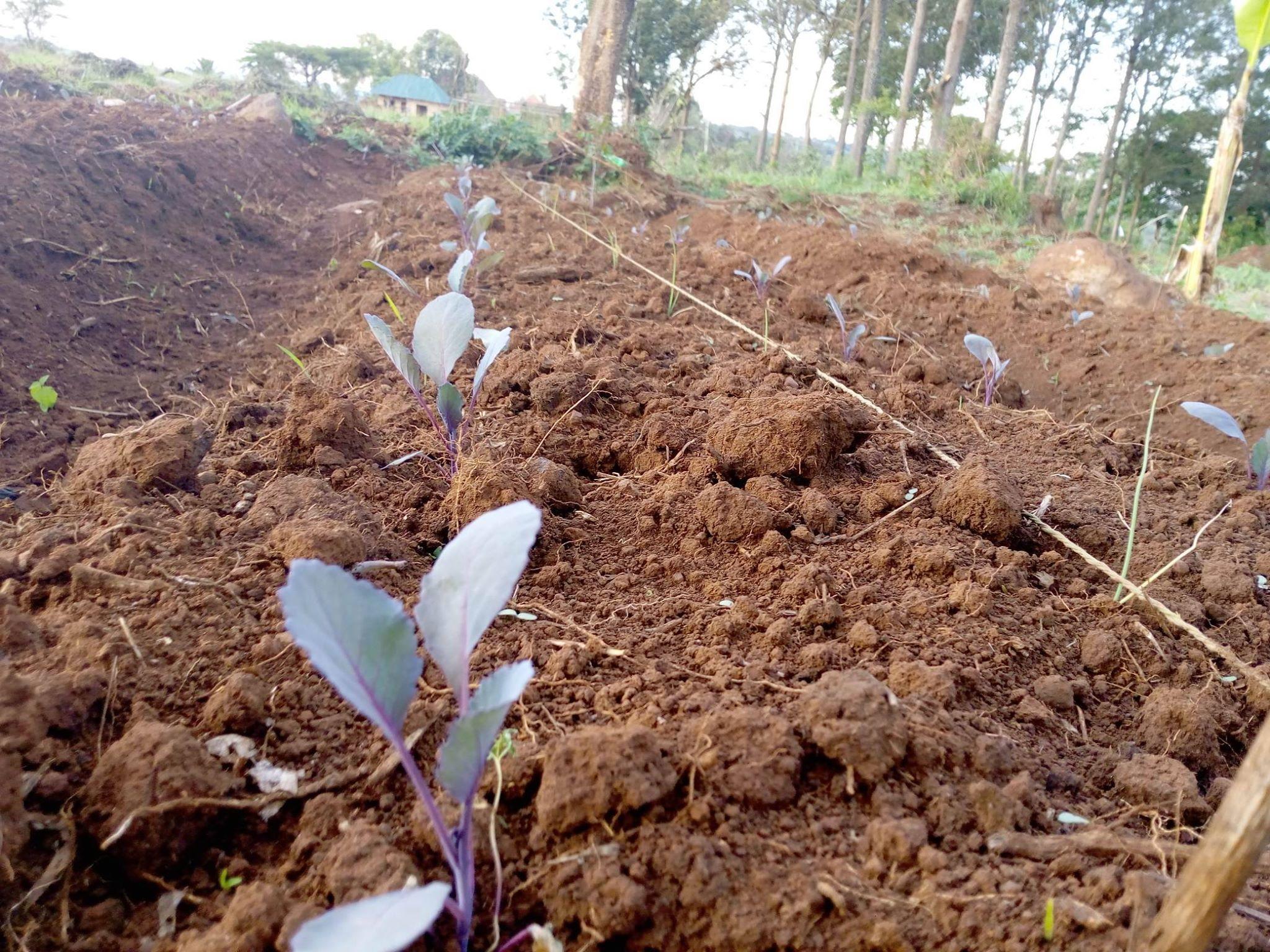 Onzekerheid voedselvoorziening neemt toe door opwarming aarde