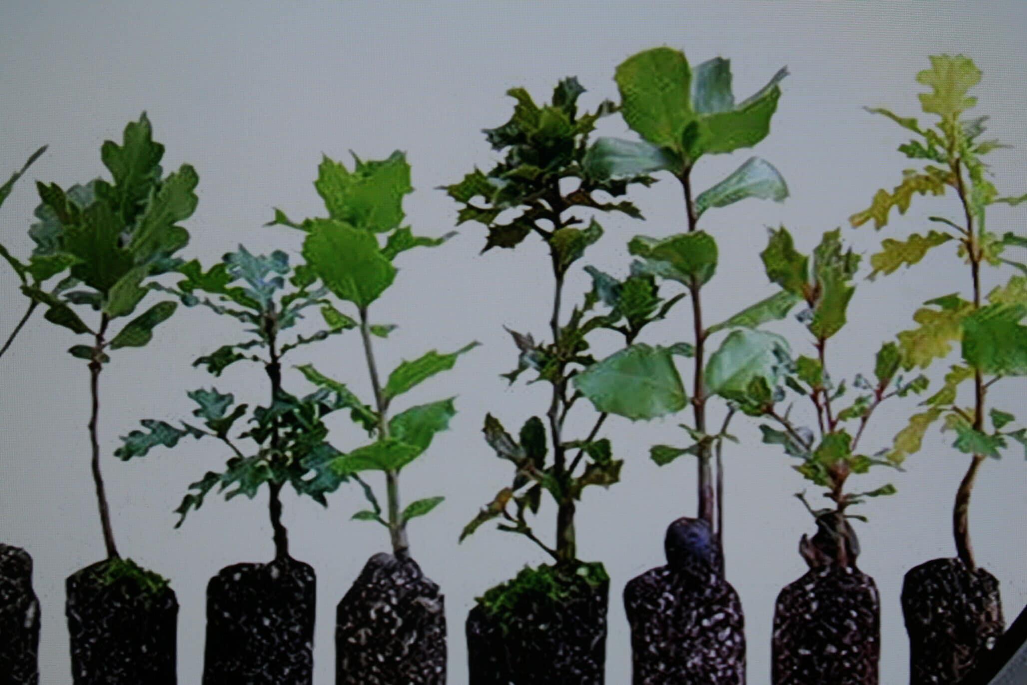 Hectare bos zet minimaal 3 ton CO2 vast per jaar