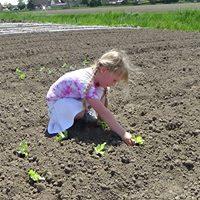 Stadslandbouw kan grote hoeveelheden mensen voeden