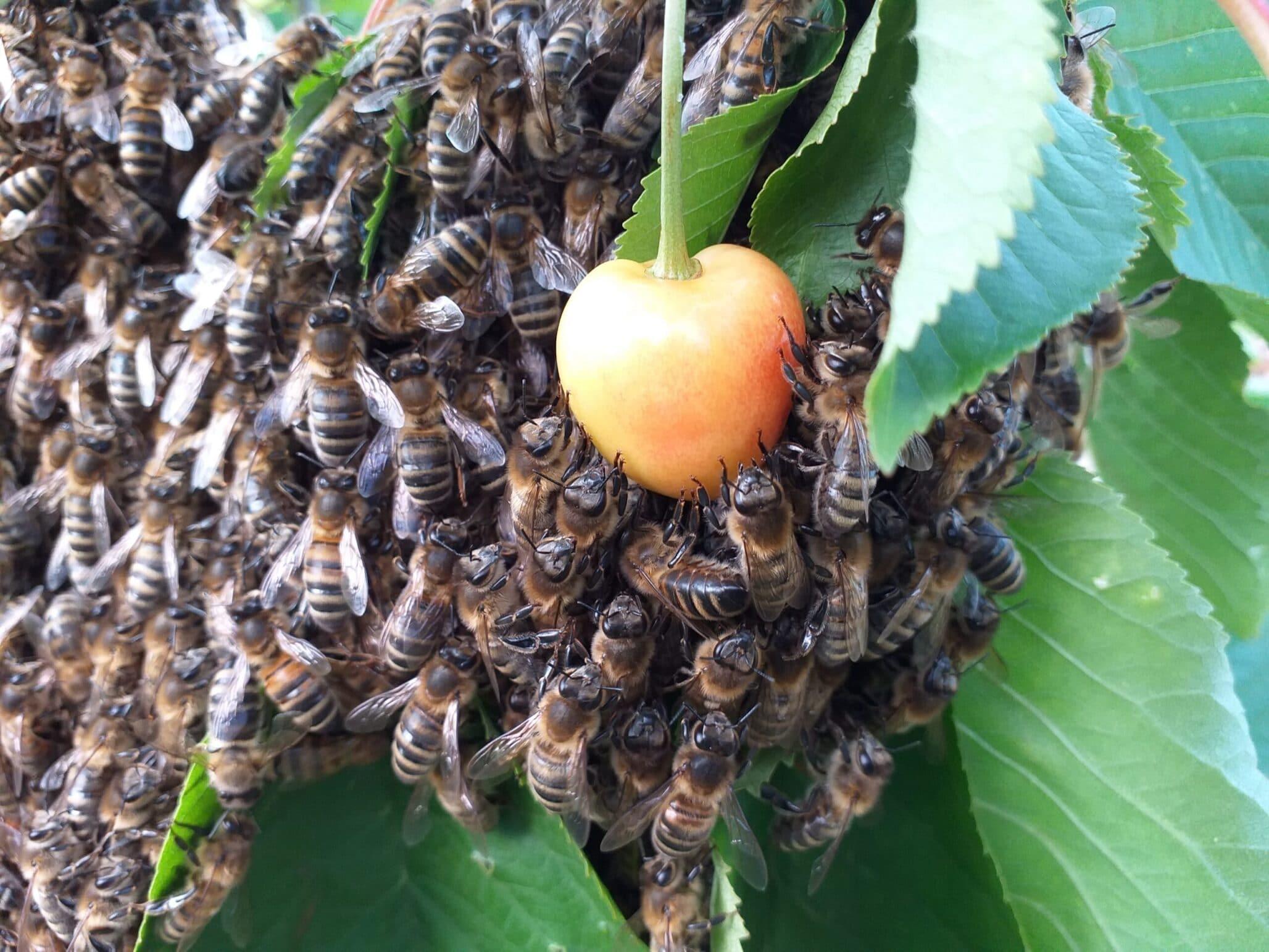 Maak met je groene kerk een bijen hotel