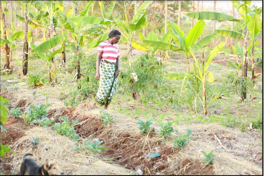 Sowing seed programma van Corazon zorgt voor dagelijks afwisselend, genoeg vers voedsel