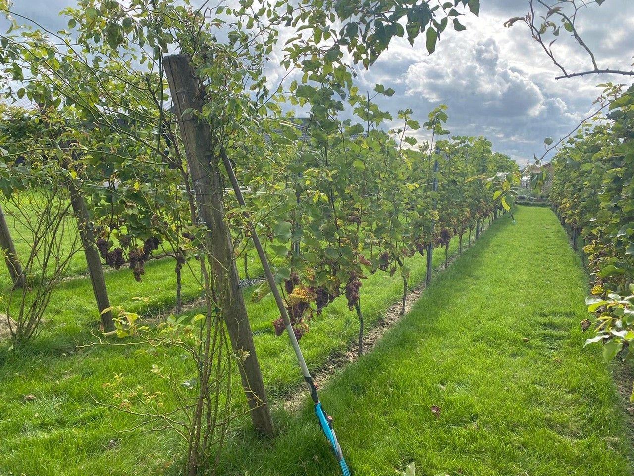 Corona geeft boeren die willen veranderen een zetje in de goede richting
