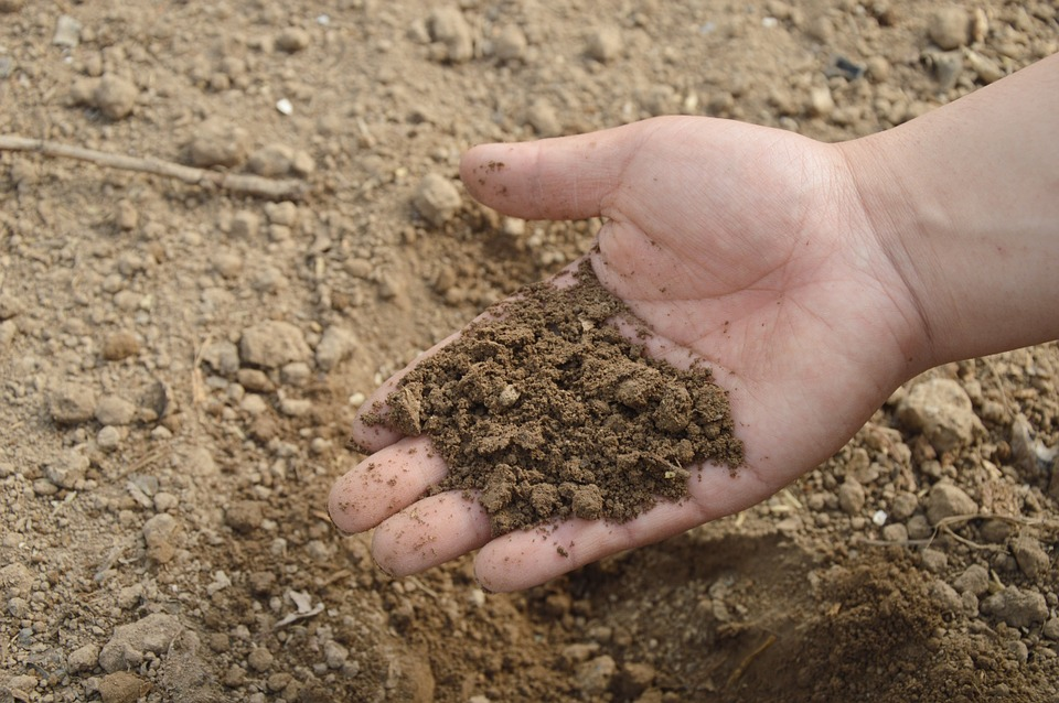 Gezonde bodem is een van de belangrijkste oplossingen om de opwarming van de Aarde tegen te gaan